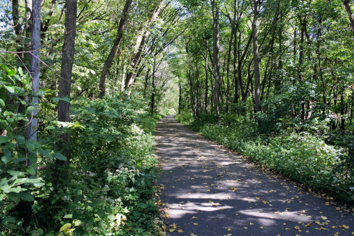 Photo of the bike trail through George Wyth State Park.